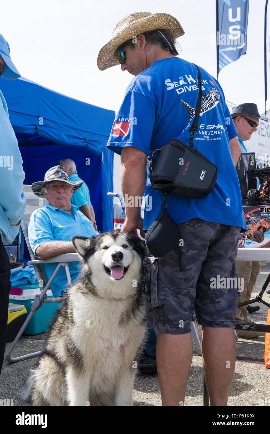 visitor-with-dog-at-wings-and-wheels-P81K9X.jpg