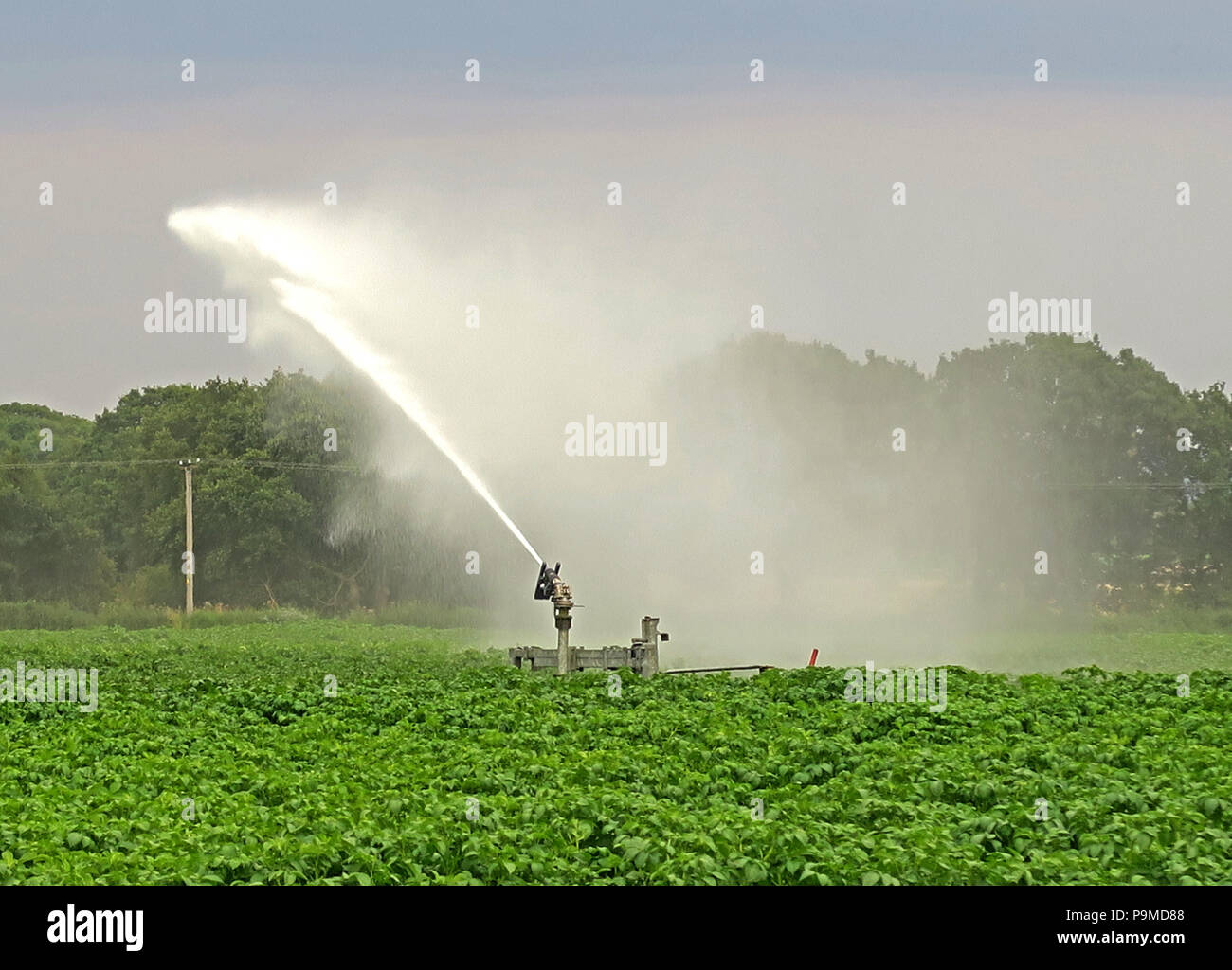 @HotpixUK,GoTonySmith,Water sprinkler,farm,in a,Yorkshire Crop field,potatoes,Summer,England,UK,potato,potato field,wasting water,drought,climate change,watering,hosepipe ban,hosepipe,ban,water shortage,centre-pivot irrigation,system,Bawtry,green,water-wheel and circle irrigation,water-wheel,and circle irrigation,equipment,Rotator style pivot applicator sprinkler,Rotator style,pivot applicator sprinkler,gallons of water,litres of water,End Gun style pivot applicator sprinkler,water supply,saving water,safeguard,water supplies