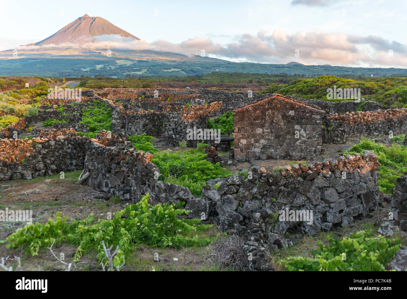 The silhouette of the Mount Pico, overlooking the hedge rows dividing the vineyards of Pico Island, Azores, Portugal Stock Photo