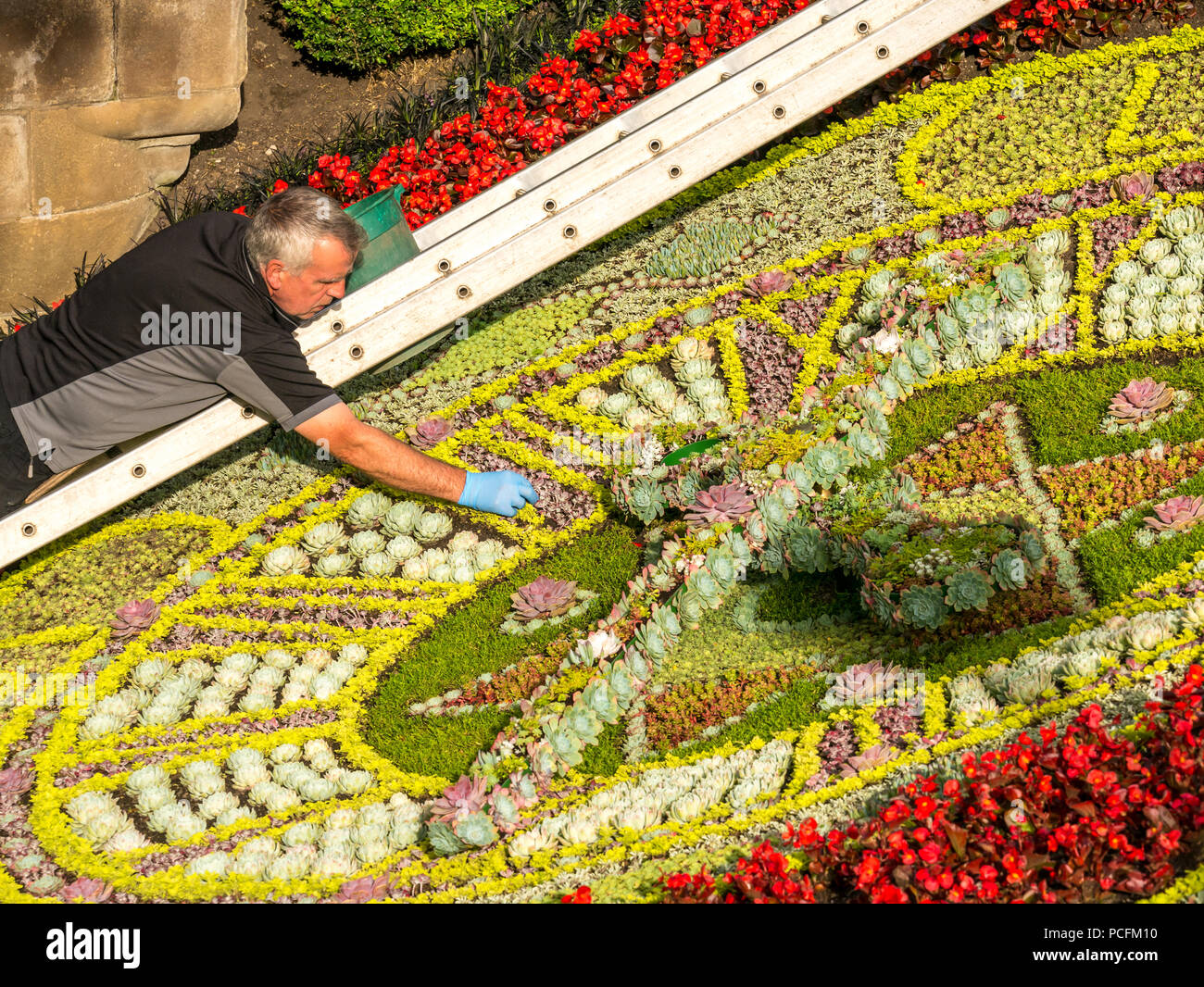 Princes Street Gardens, Edinburgh, Scotland, UK, 1st August 2018. Lovely warm morning sunshine in the city centre gardens. A gardener carefully weeds the historic floral clock. There is a different theme for the historic clock each year. It was first created in 1903 by the Edinburgh Parks Superintendent, John McHattie, and is the oldest floral clock in the world. This year it has been designed with poppies to mark 100 years since the signing of the Armistice, leading to the end of the First World War. Credit: Sally Anderson/Alamy Live News Stock Photo