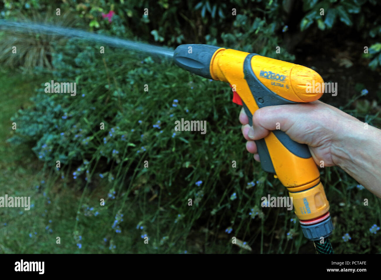 GoTonySmith,@HotpixUK,summer,warm,water,waste,hosepipe,pointing,spray,spraying,hosepipe hose,Woman,resident,garden,summertime,squeeze,squeezing,squeezing trigger,squirting,squirting water,yellow,water company,United Utilities,Privatised Water,Privatised Water Company,Water Company,person using hosepipe,person using a hosepipe,hand,arm,fingers,gardening,hedge,shrub,shower,wet,wetting,outdoors,watering