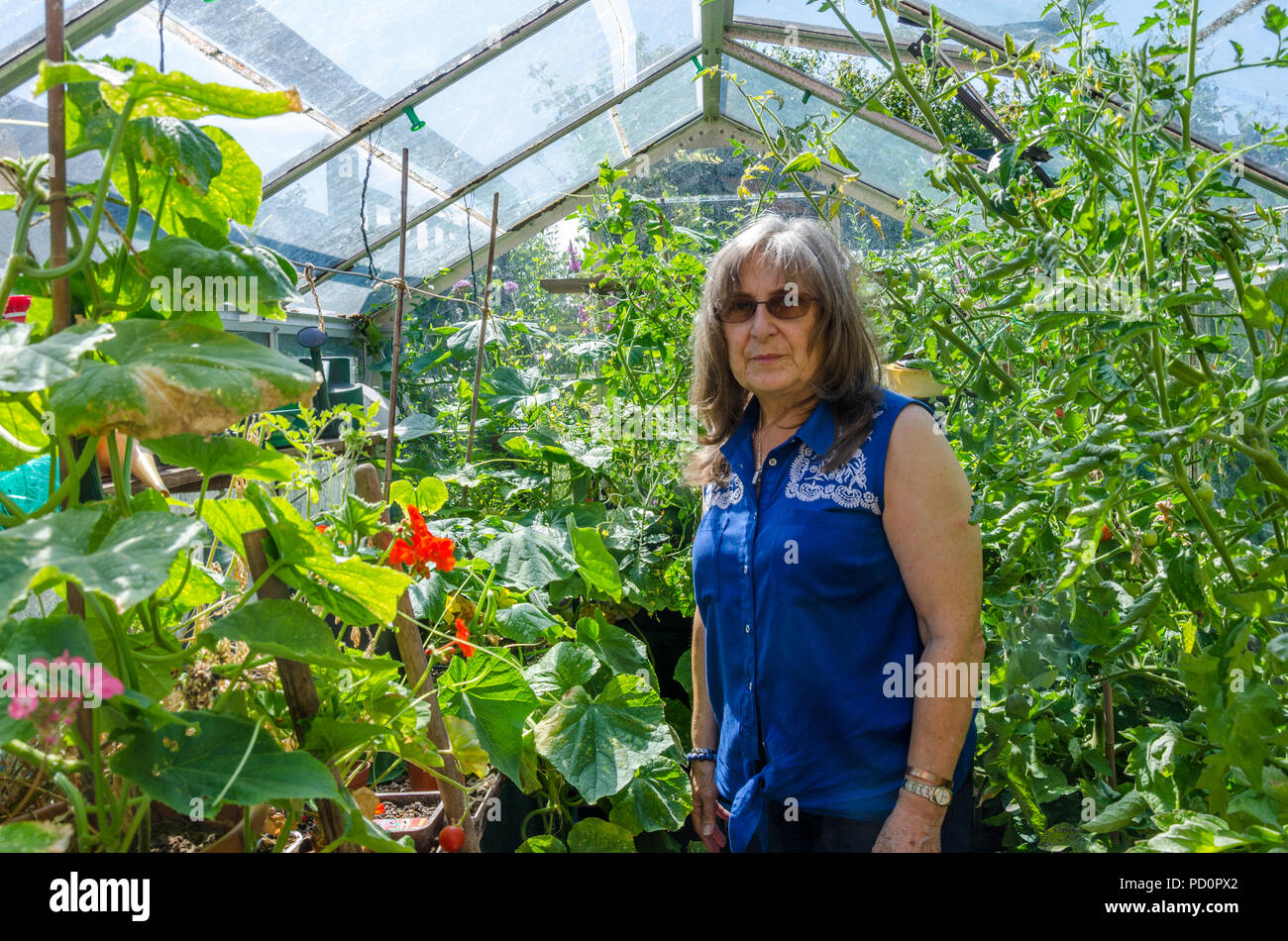a-lady-surveys-the-tomato-and-cucumber-plants-that-are-growing-in-her-greenhouse-PD0PX2.jpg