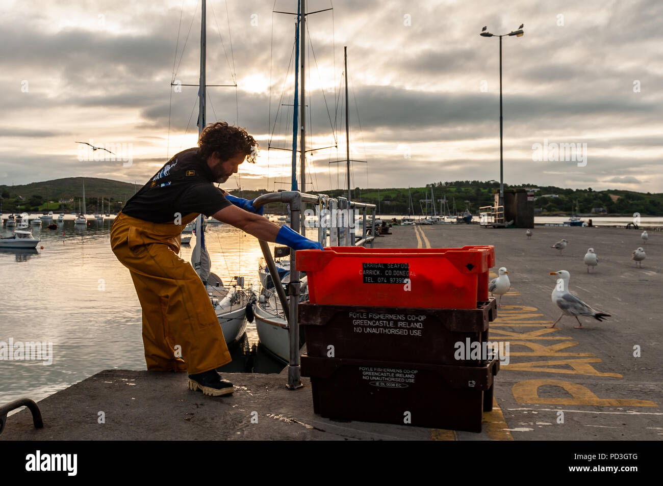 Schull, West Cork, Ireland. 7th Aug, 2018. A local fisherman moves bait from the pier to his boat in preparation for a day's crab fishing.  The day will be dry and cloudy with highs of 16° Celsius. Credit: Andy Gibson/Alamy Live News. Stock Photo