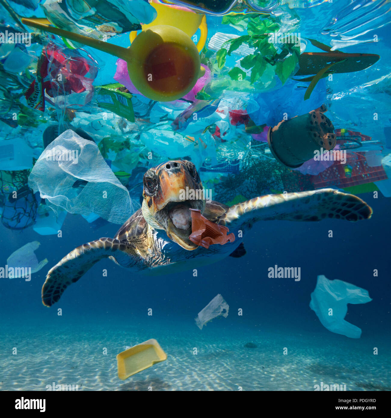 Turtle eating a plastic cup drifting in the middle of a huge garbage patch floating in the ocean. The animals ingest these pieces of plastic thought Stock Photo