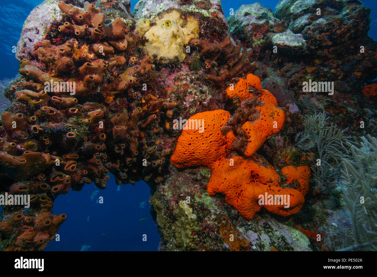 Sponges covering an underwater reef off the Florida Keys Stock Photo