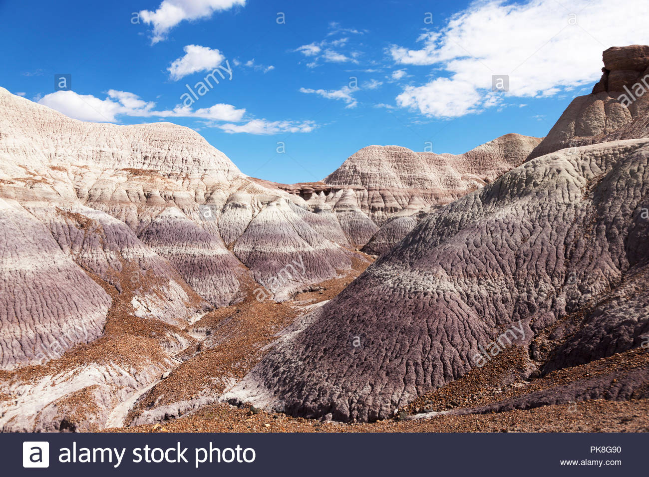 along-blue-forest-trail-blue-mesa-petrified-forest-national-park-arizona-usa-PK8G90.jpg