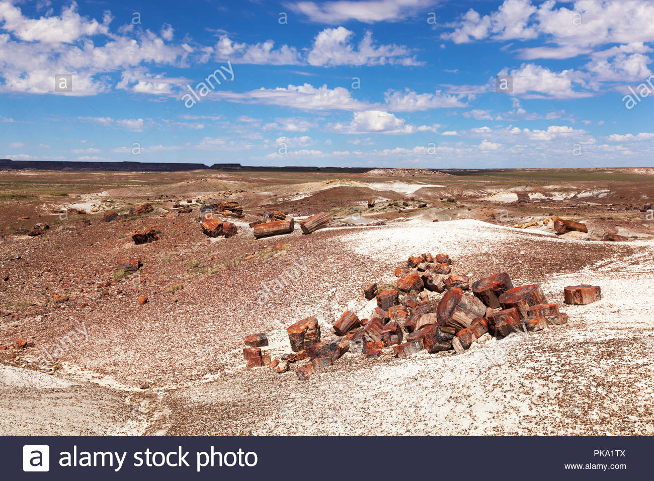 crystal-forest-petrified-logs-along-trail-petrified-forest-national-park-arizona-usa-PKA1TX.jpg