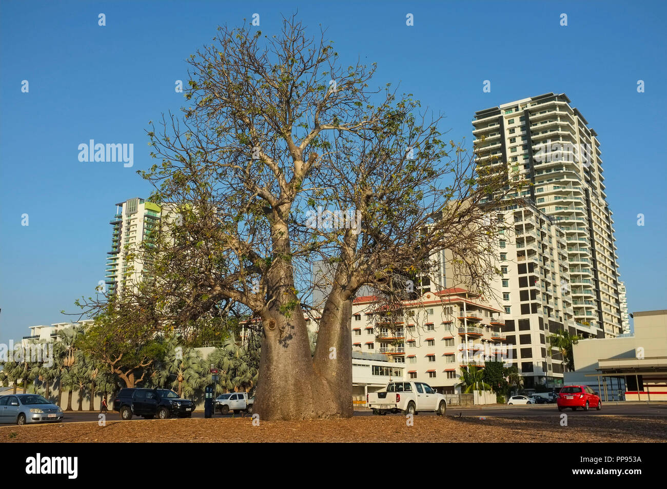 the-boab-tree-in-the-darwin-post-office-car-park-was-planted-in-the-late-1800s-and-mark-the-site-of-darwin-city-first-primary-school-PP953A.jpg