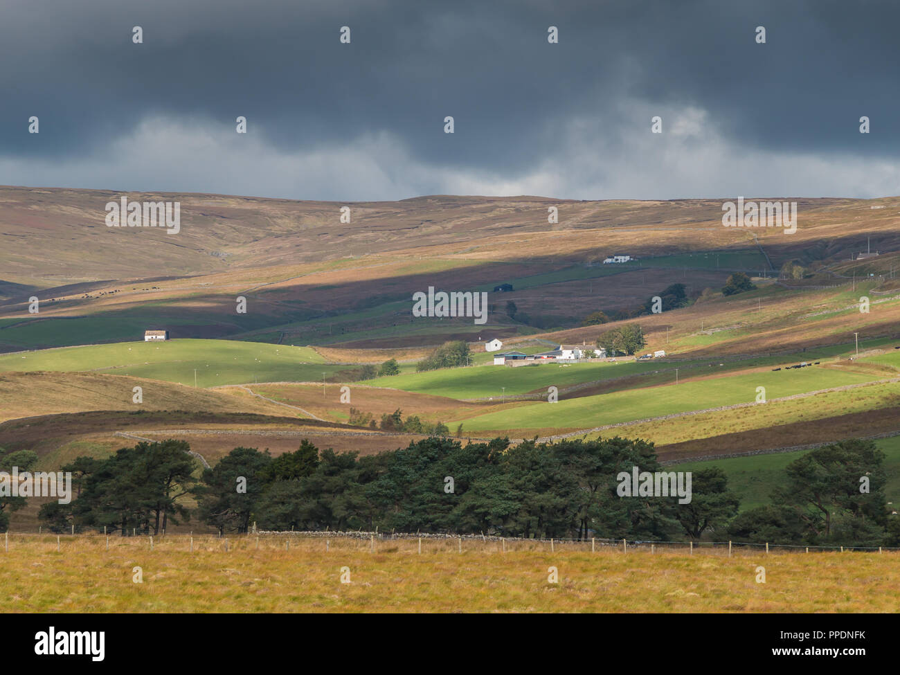 north-pennines-aonb-landscape-lingy-hill-farm-harwood-upper-teesdale-lit-by-strong-autumn-sunshine-under-a-stormy-sky-PPDNFK.jpg