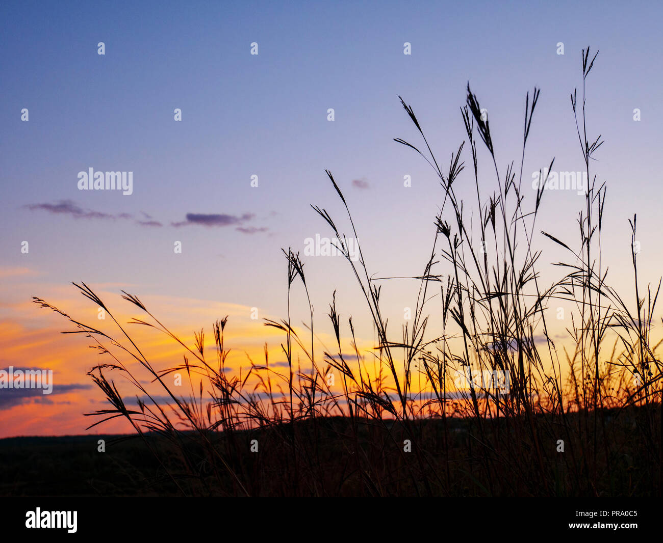 big-bluestem-grass-pheasant-branch-conse