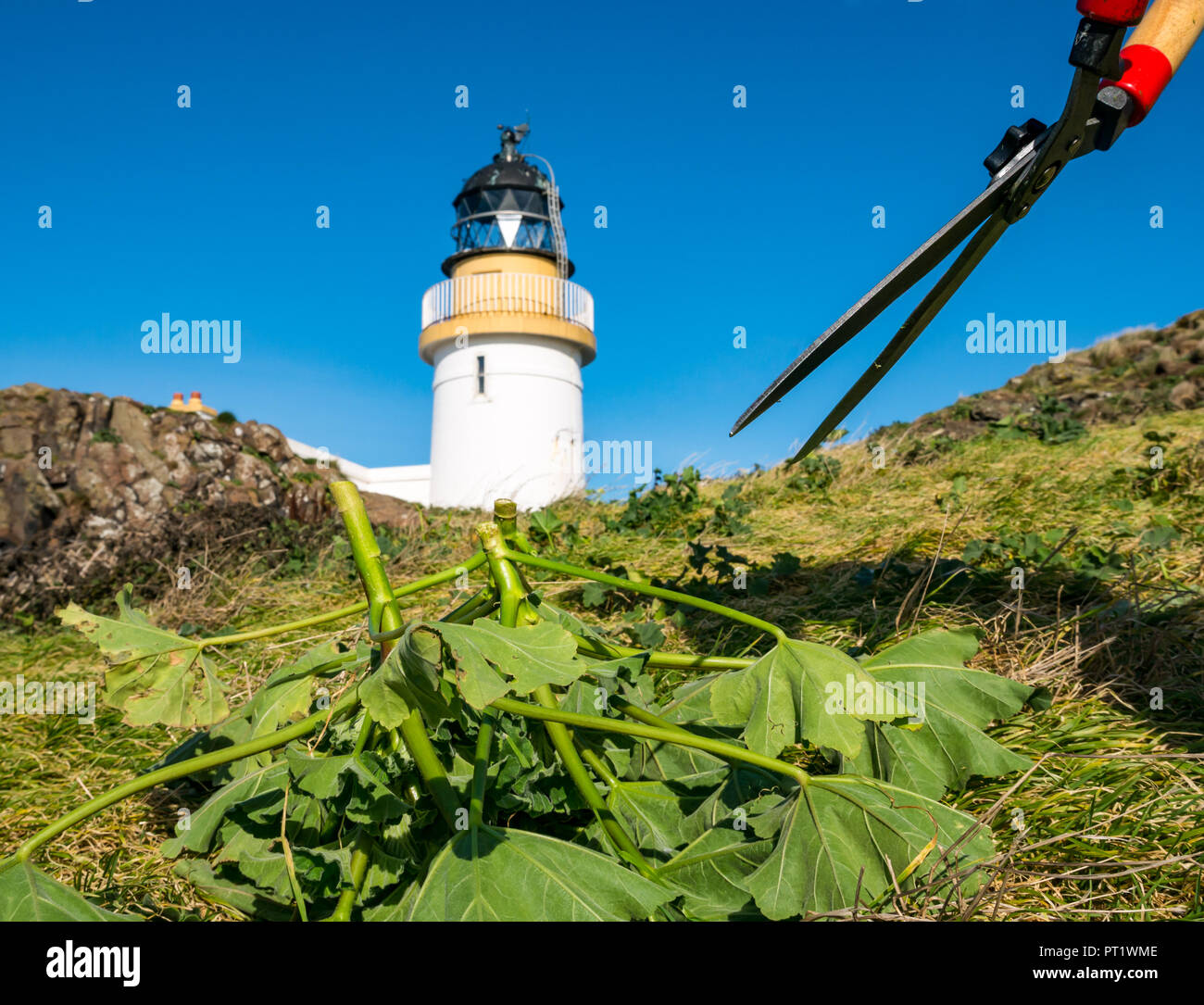 fidra-island-firth-of-forth-scotland-uni