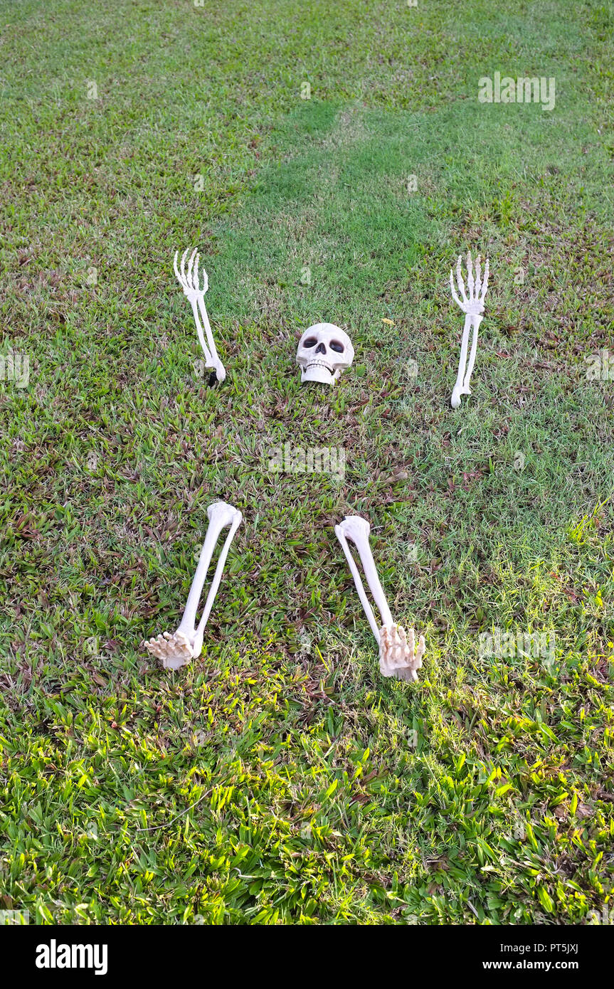 plastic-skeleton-rising-off-the-lawn-for-halloween-decoration-PT5JXJ.jpg