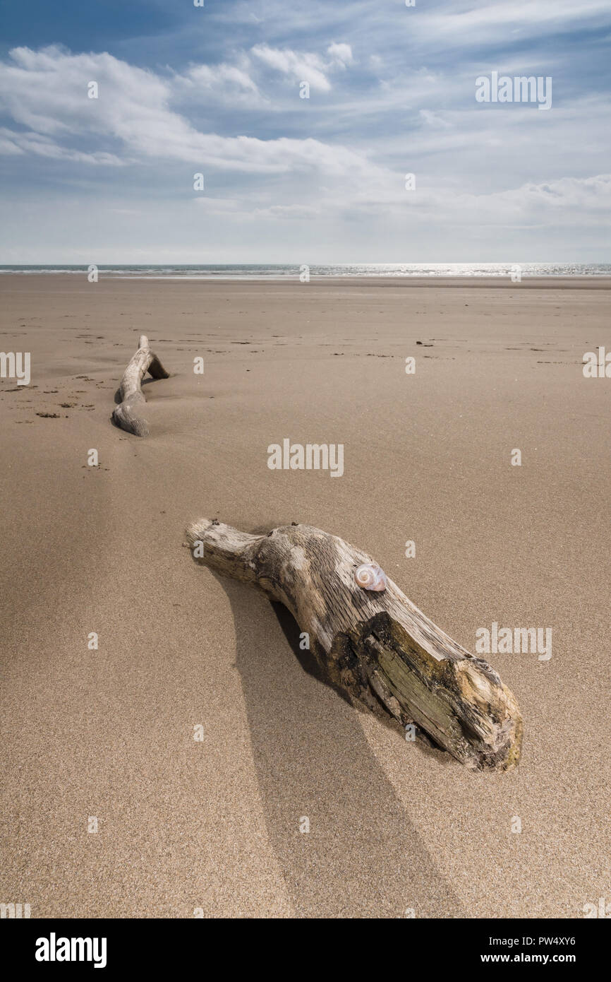 An empty beach and a piece of drift wood shaped like a serpent providing a surreal feeling to the sceneStock Photo