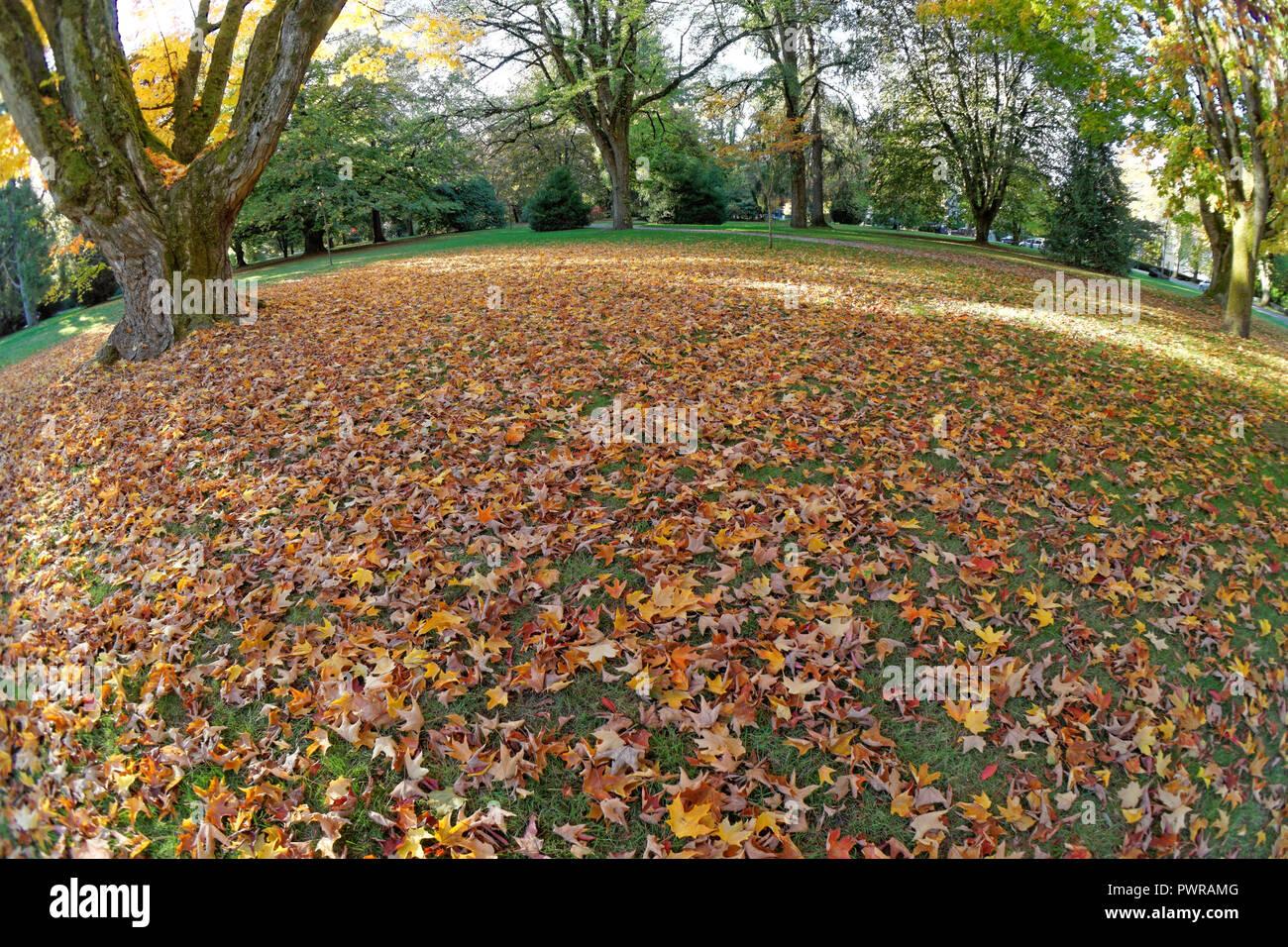 fisheye-view-of-colorful-fall-maple-leav