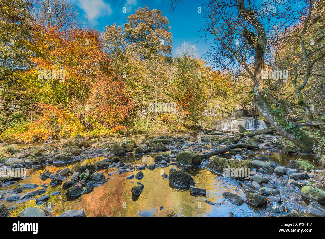 yorkshire-dales-national-park-autumn-landscape-vivid-autumn-colours-at-cotter-force-waterfall-hawes-wensleydale-uk-PXHN1A.jpg