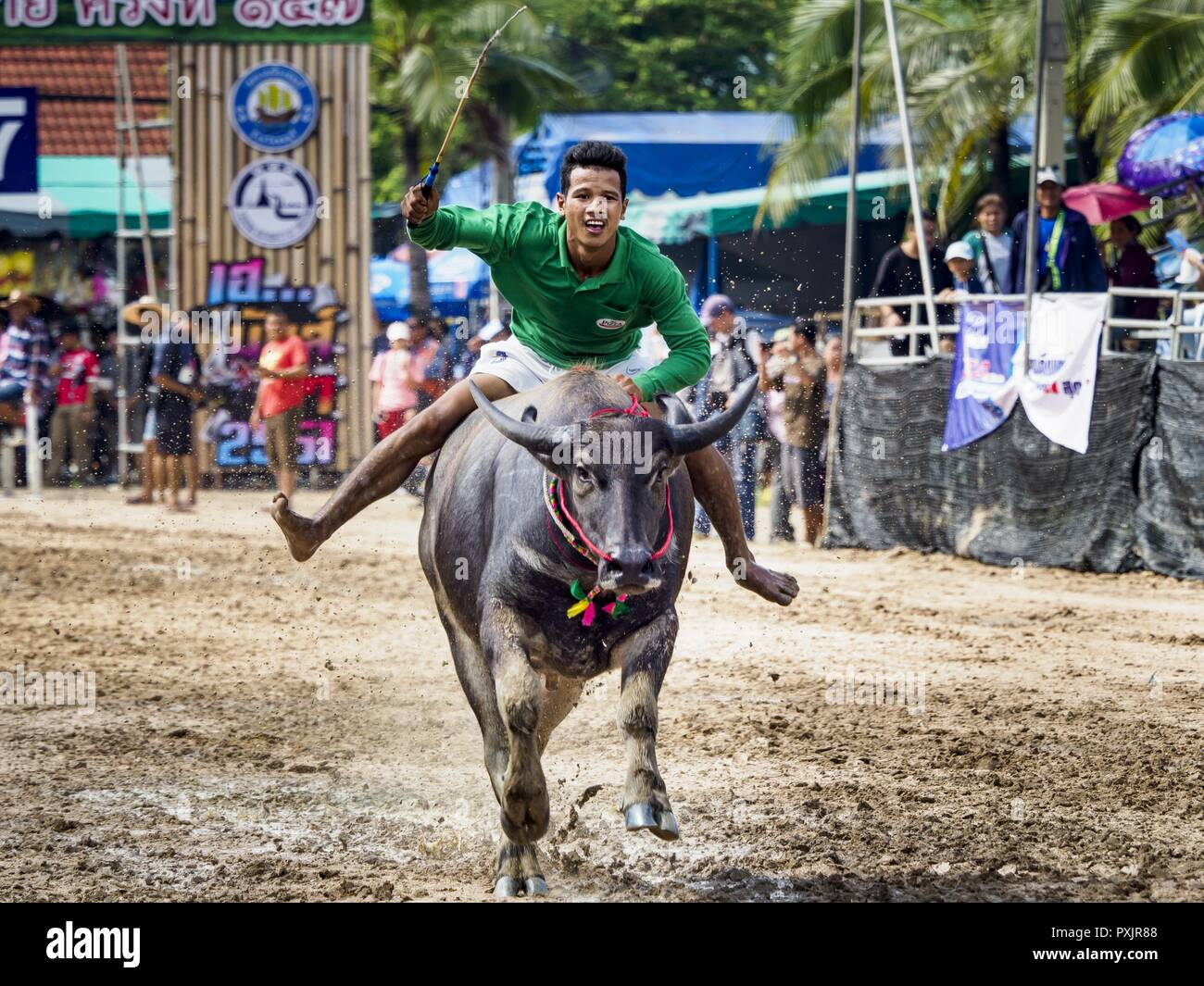 Chonburi, Chonburi, Thailand. 23rd Oct, 2018. A jockey rides a water buffalo in the races in Chonburi. Contestants race water buffalo about 100 meters down a muddy straight away. The buffalo races in Chonburi first took place in 1912 for Thai King Rama VI. Now the races have evolved into a festival that marks the end of Buddhist Lent and is held on the first full moon of the 11th lunar month (either October or November). Thousands of people come to Chonburi, about 90 minutes from Bangkok, for the races and carnival midway. Credit: Jack Kurtz/ZUMA Wire/Alamy Live News Stock Photo