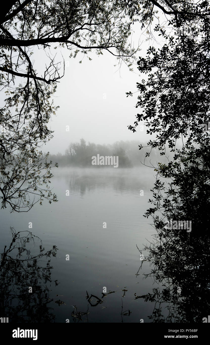 misty-lake-through-trees-PY56BF.jpg