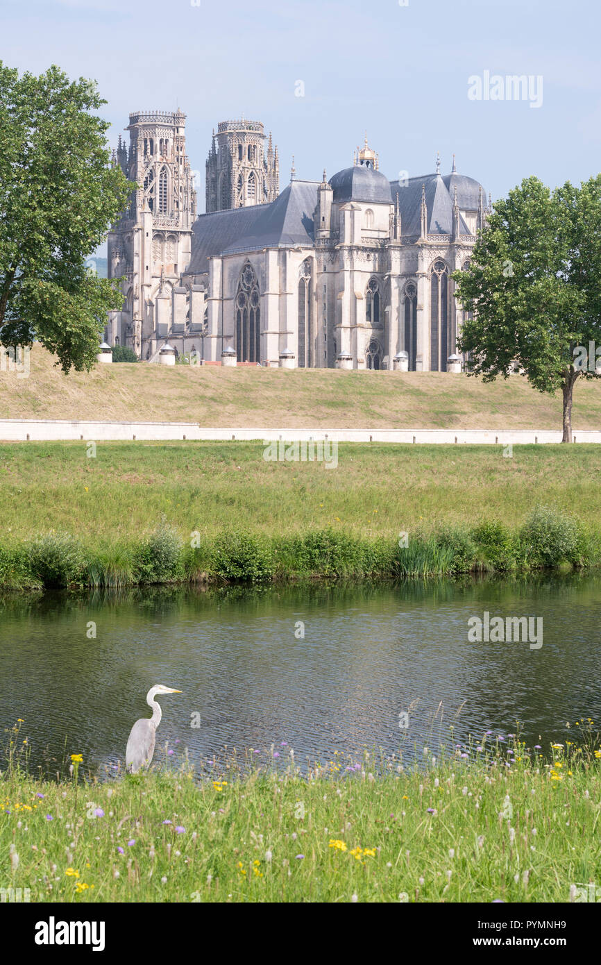 a-grey-heron-by-the-side-of-the-moselle-