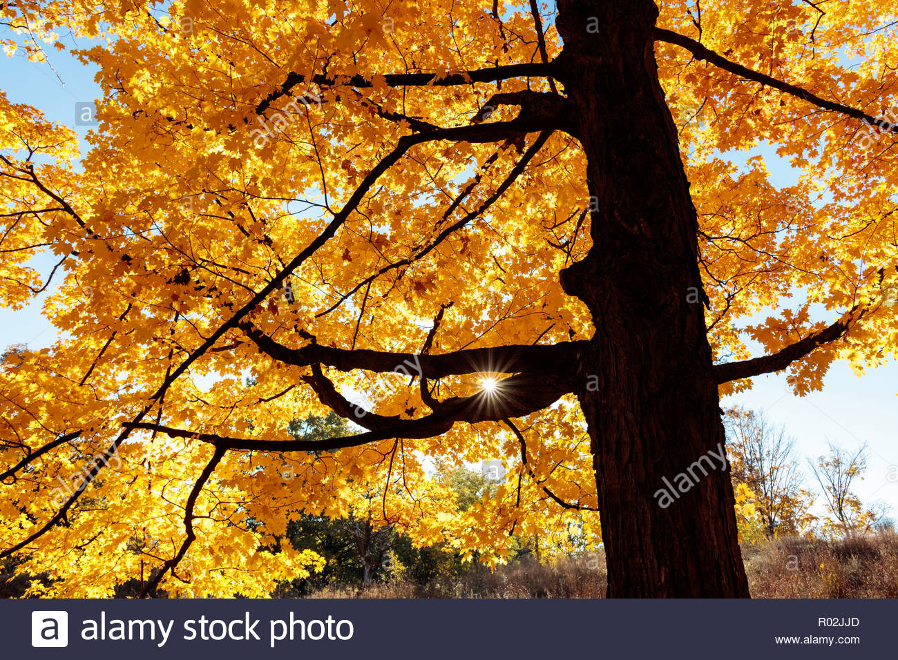Autumn colour in the Carolinian Forest in High Park in fall in Toronto Ontario Canada Stock Photo