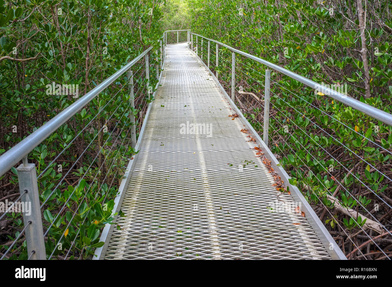 the-east-point-mangrove-board-walk-in-the-suburb-of-darwin-city-in-the-northern-territory-of-australia-R16BXN.jpg