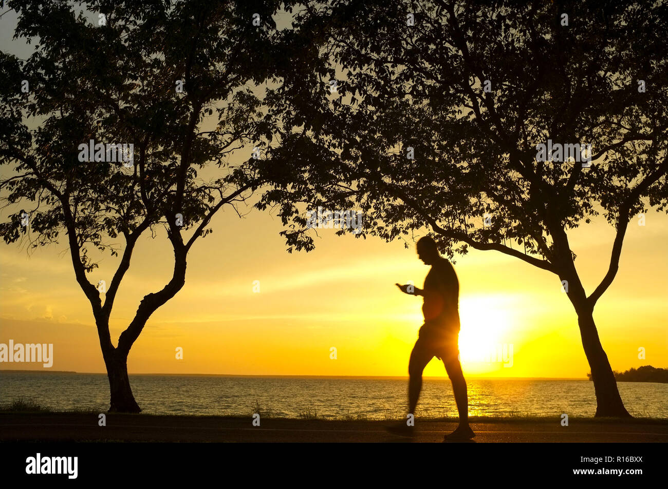 silhouette-of-trees-and-a-man-walking-while-looking-at-his-mobile-phone-against-a-beach-sunset-R16BXX.jpg
