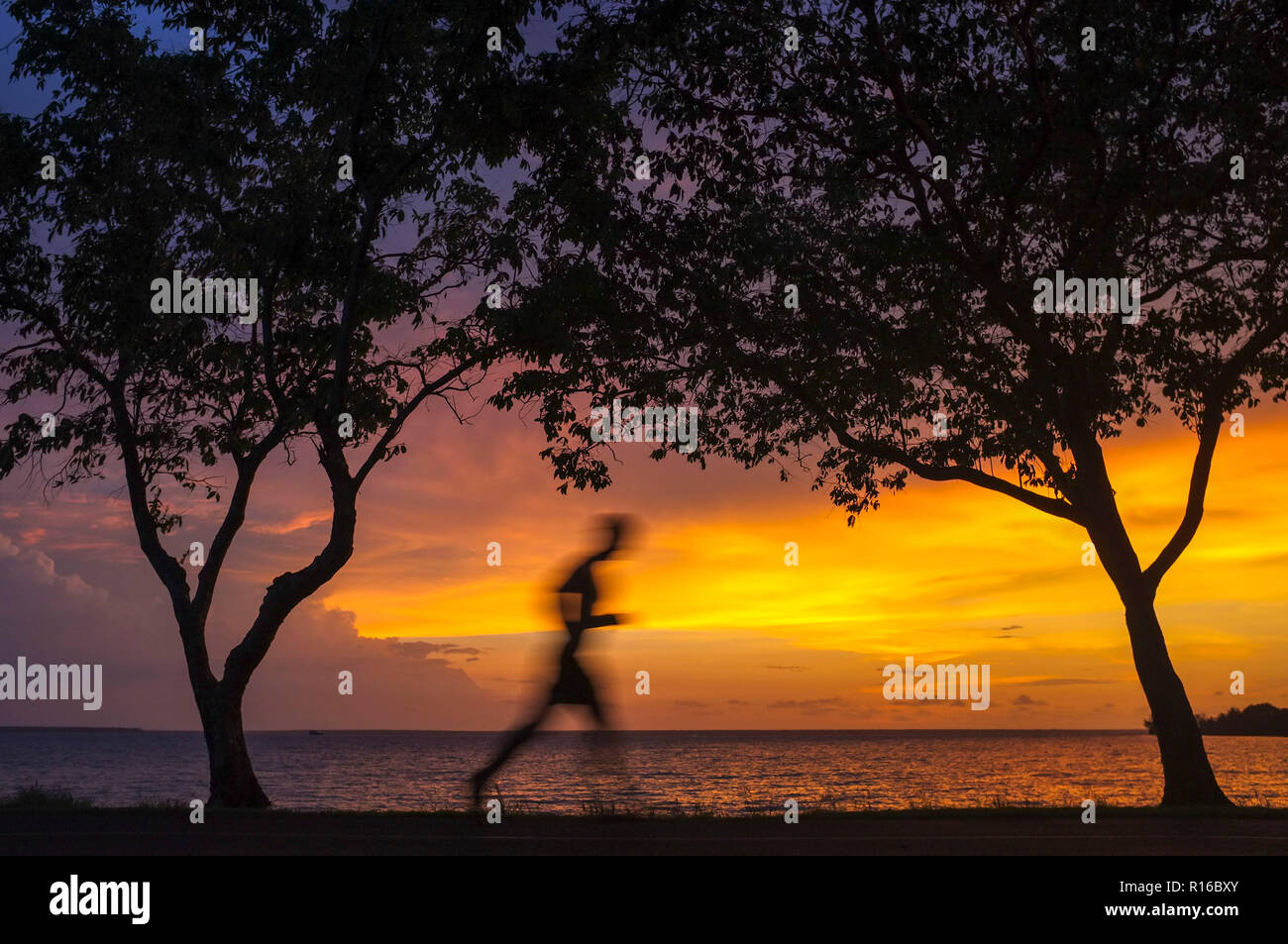 Silhouette of a man jogging between trees against a beach sunset. Stock Photo