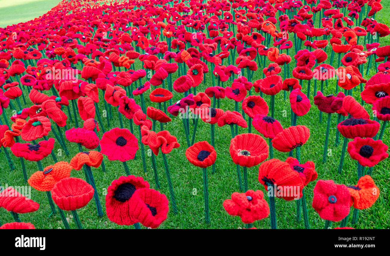 2018-remembrance-day-poppy-project-display-of-handcrafted-poppies-in-kings-park-perth-western-australia-R192NT.jpg