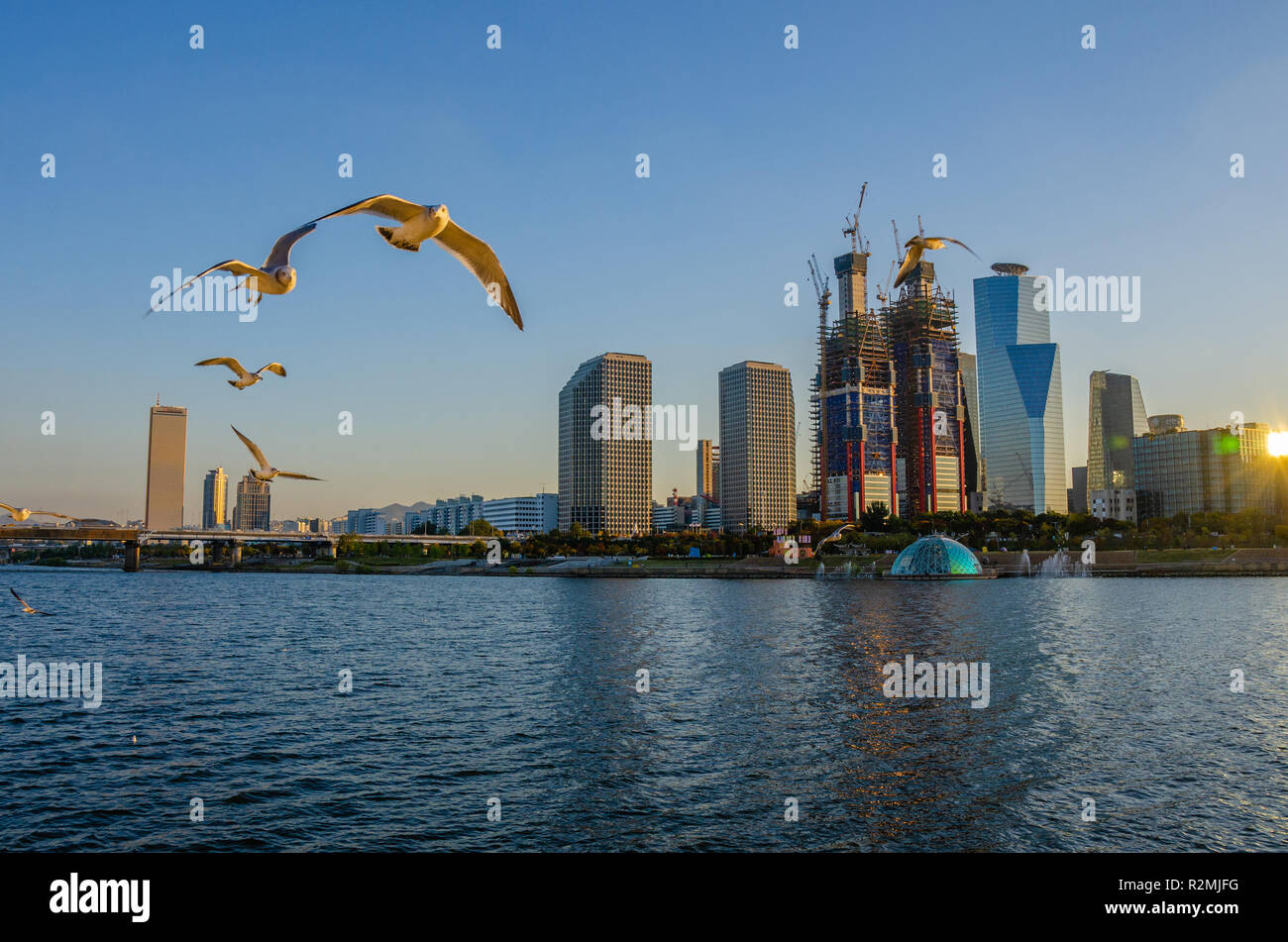 seaguls-fly-over-the-han-river-in-seoul-south-korea-in-early-evening-in-yeoeido-dong-new-skyscrapers-are-being-constructed-R2MJFG.jpg