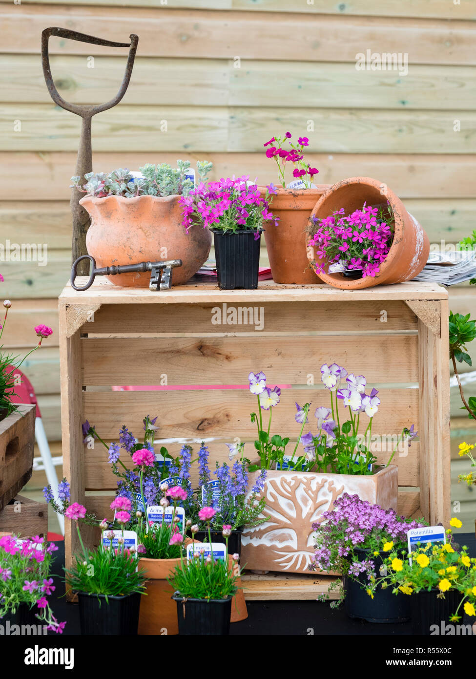 Part of the plant display on The Garden House stand at Devon County Show 2018 Stock Photo