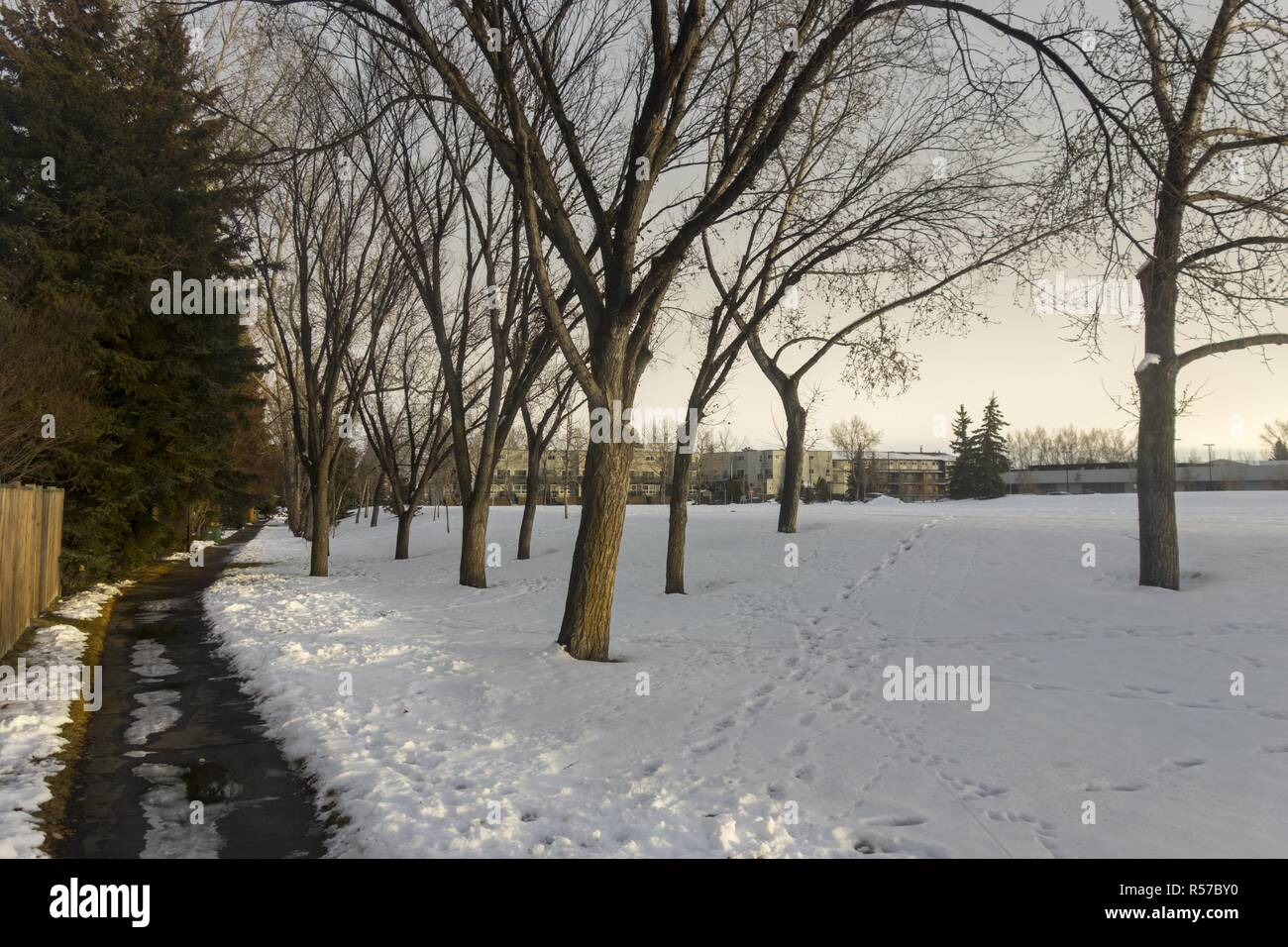 lonely-path-in-snowy-park-and-barren-asp