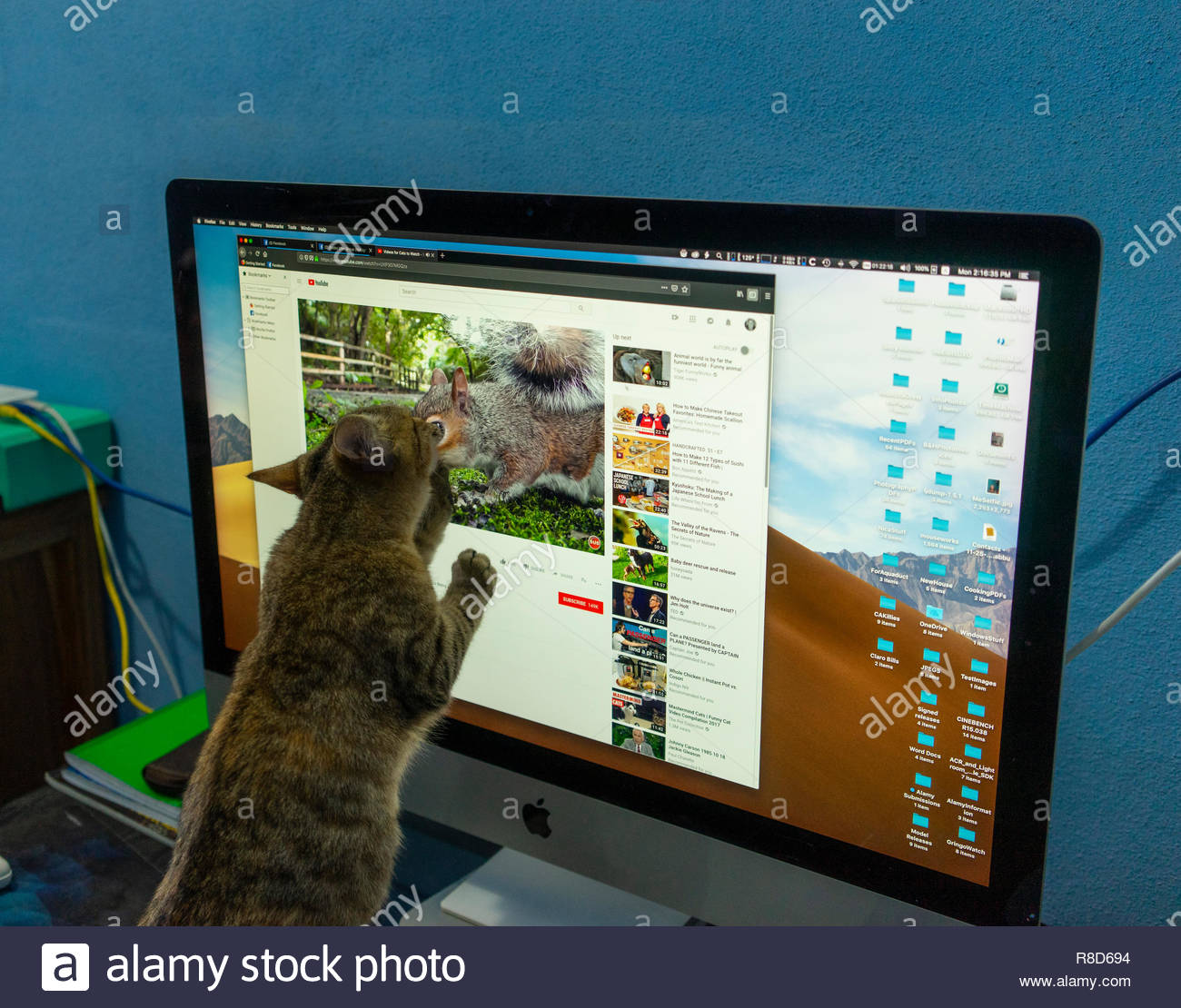 cat-attacks-a-youtube-squirrel-in-a-vide