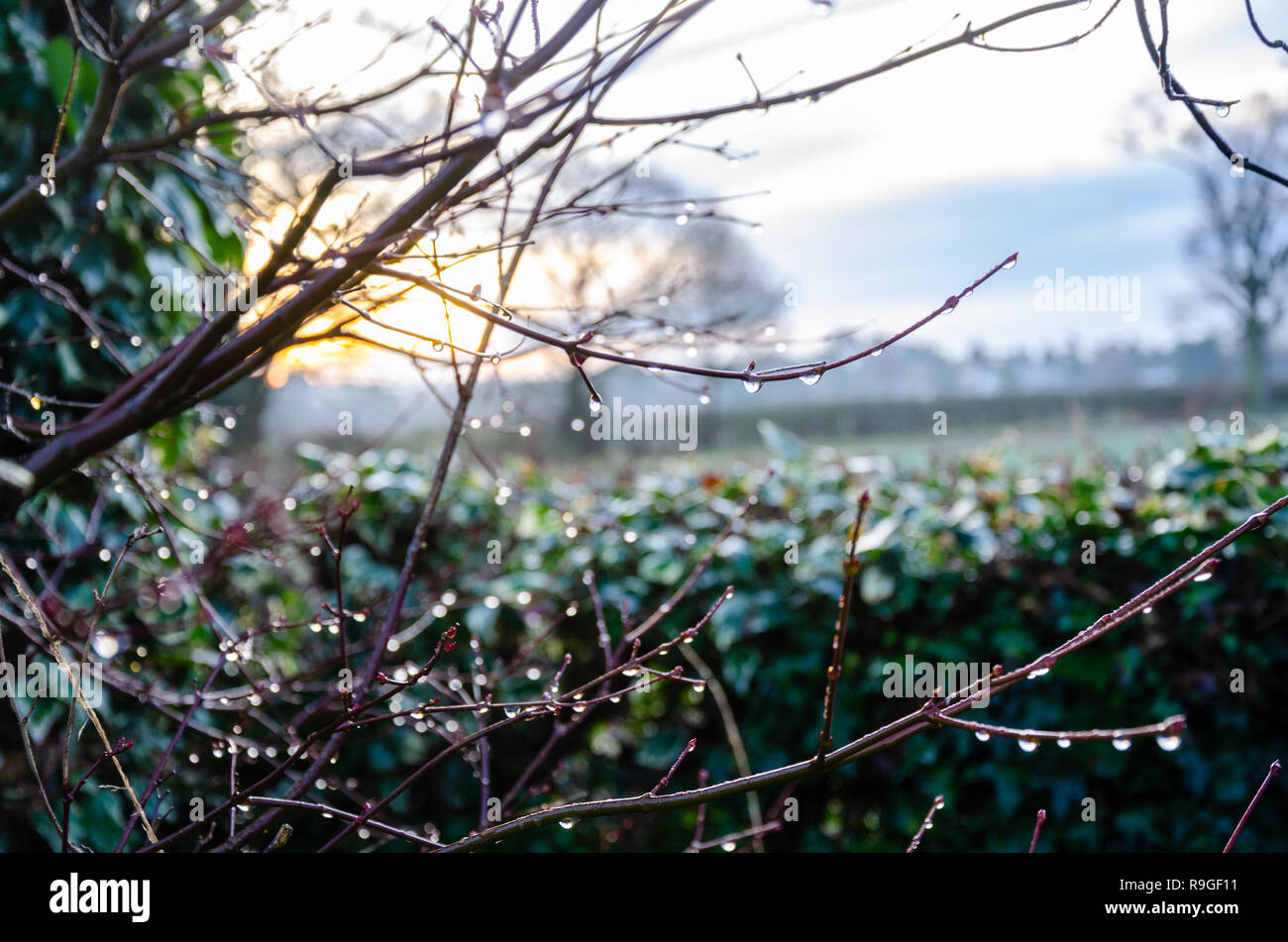 south-staffordshire-uk-24th-dec-2018-uk-weather-early-morning-sun-on-what-looks-to-be-a-warm-christmas-eve-in-south-staffordshire-near-wolverhampton-matthew-ashmorealamy-live-news-R9GF11.jpg