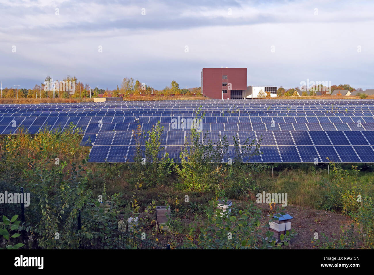 GoTonySmith,@HotpixUK,HotpixUK,Solar,Panel,Solar Panels,Dalkeith,Lothian,Scotland,UK,Eco,ecological,renewable,energy,Solar Farm,electricity,power,carbon-free,carbon neutral,carbon free,solar pv,farm,meadow,field,power generation,Scottish,EH22,Scottish PV,Scotland Solar Power,generating electricity,from solar,photo-voltaic panels,SSE,Scottish Southern Energy,Steve Tinsley,Green Deal,Energy,Solutions,going green,green energy