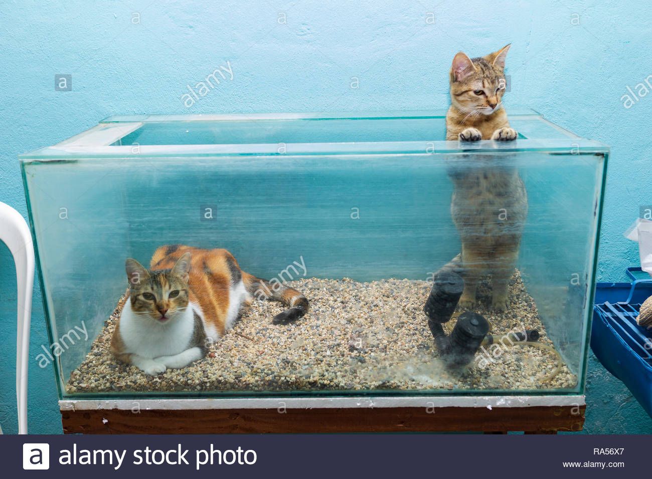 cats-in-an-empty-aquarium-prove-again-that-cats-love-boxes-RA56X7.jpg
