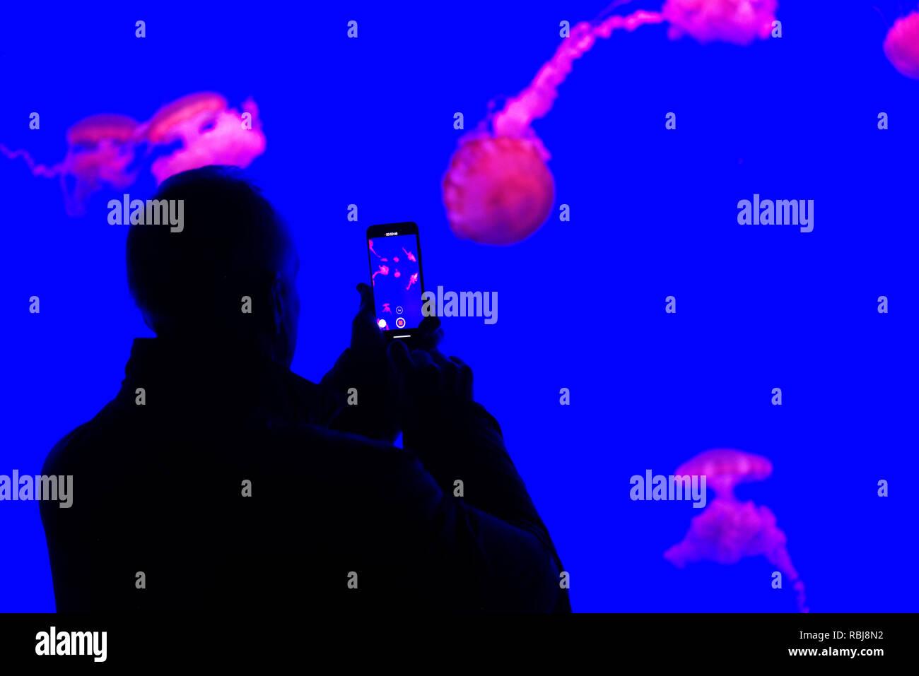 A man taking photos of the jellyfish inside Ripley's Aquarium of Canada, Toronto, Ontario Stock Photo