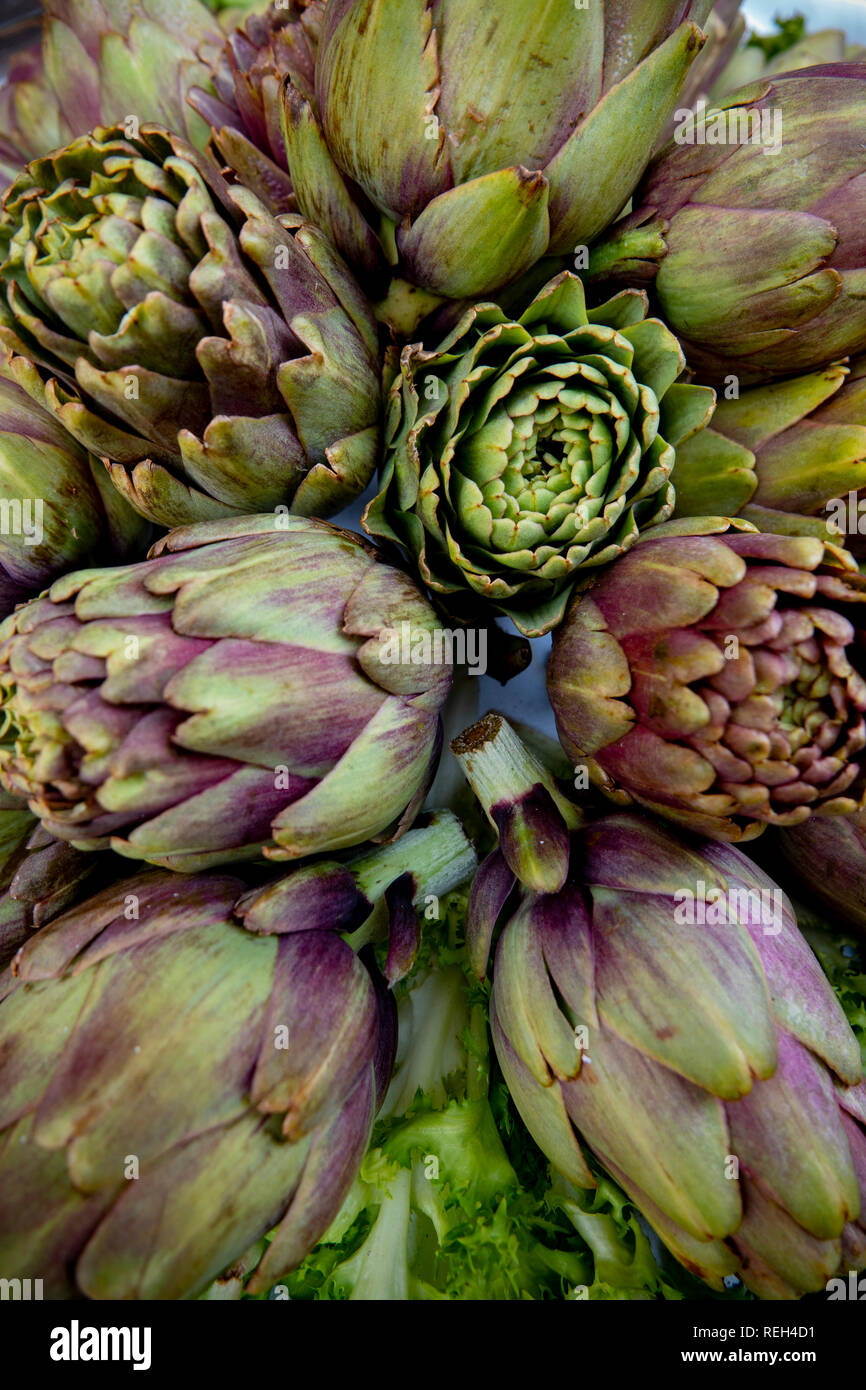 food-vegetable-artichokes-raw-purple-italian-REH4D1.jpg