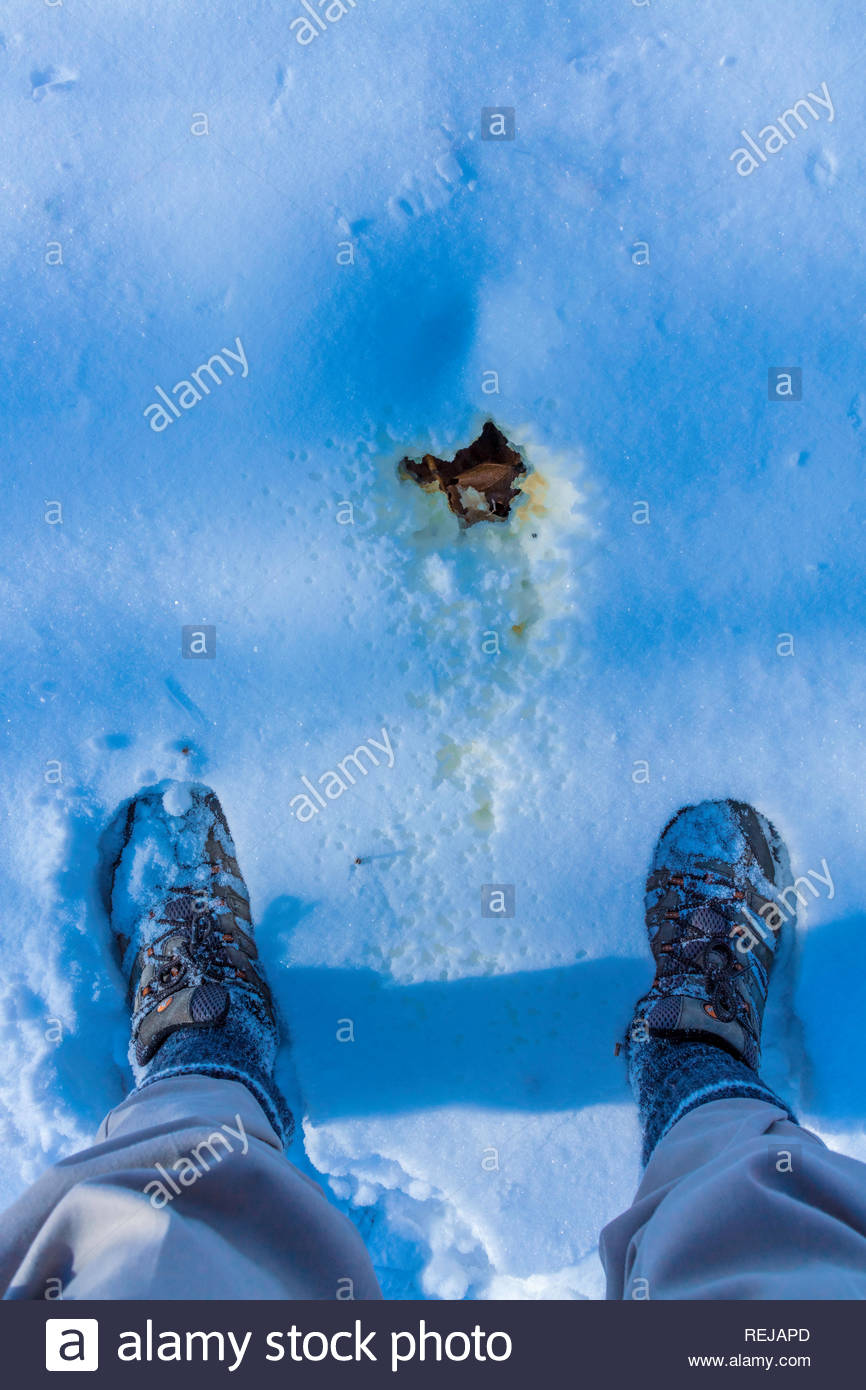 Pissing peeing in the snow on a cold winter day in Canada. Stock Photo