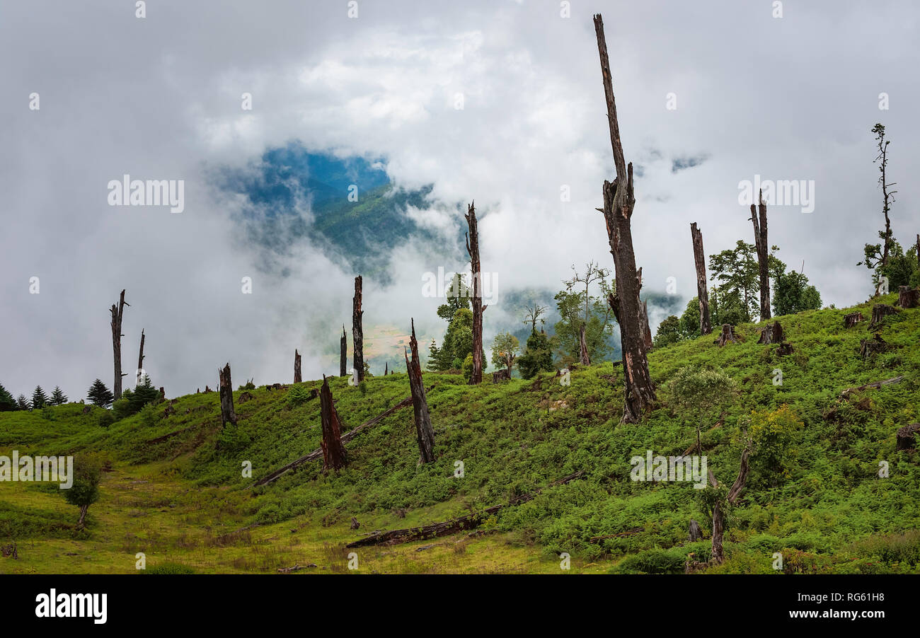 Disease and deforestation along the slopes and forests on monsoon morning in Himalayas near Tawang, Arunachal Pradesh, India. Stock Photo