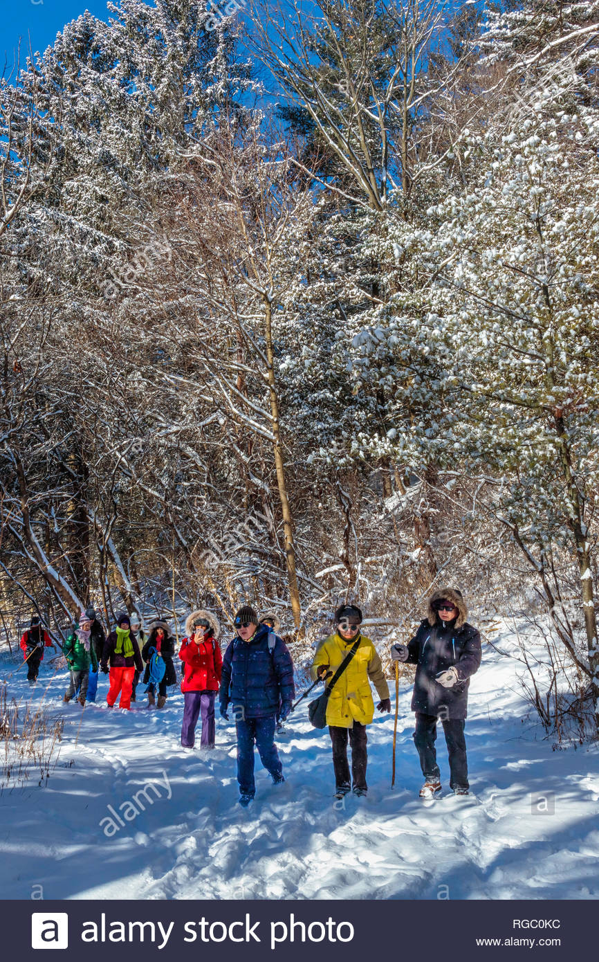shinrin-yoku-winter-hiking-group-on-a-hi