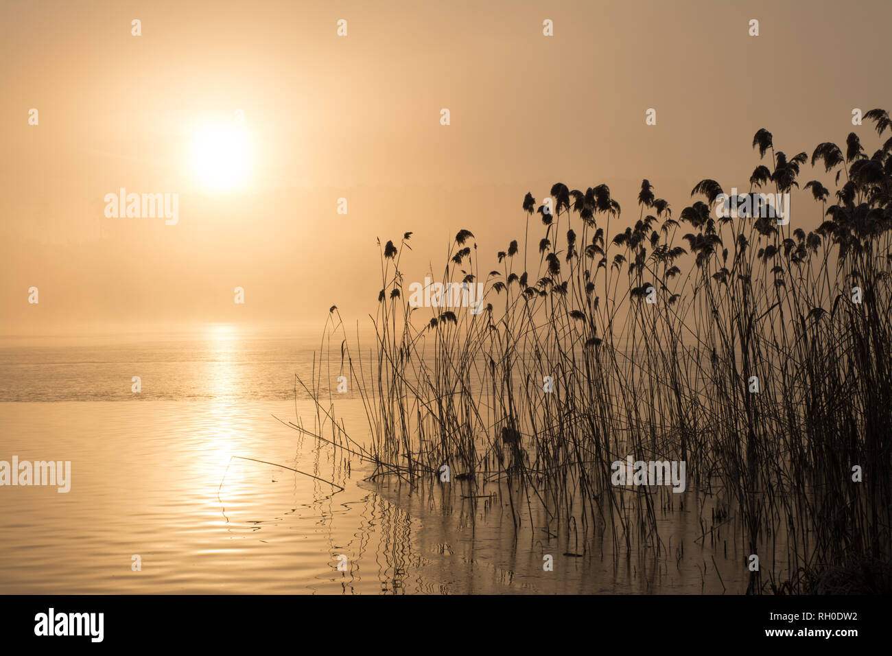 frensham-great-pond-surrey-uk-31st-january-2019-uk-weather-following-the-coldest-night-of-the-winter-so-far-this-morning-started-with-freezing-fog-the-sun-soon-shone-through-producing-beautiful-wintry-scenes-RH0DW2.jpg