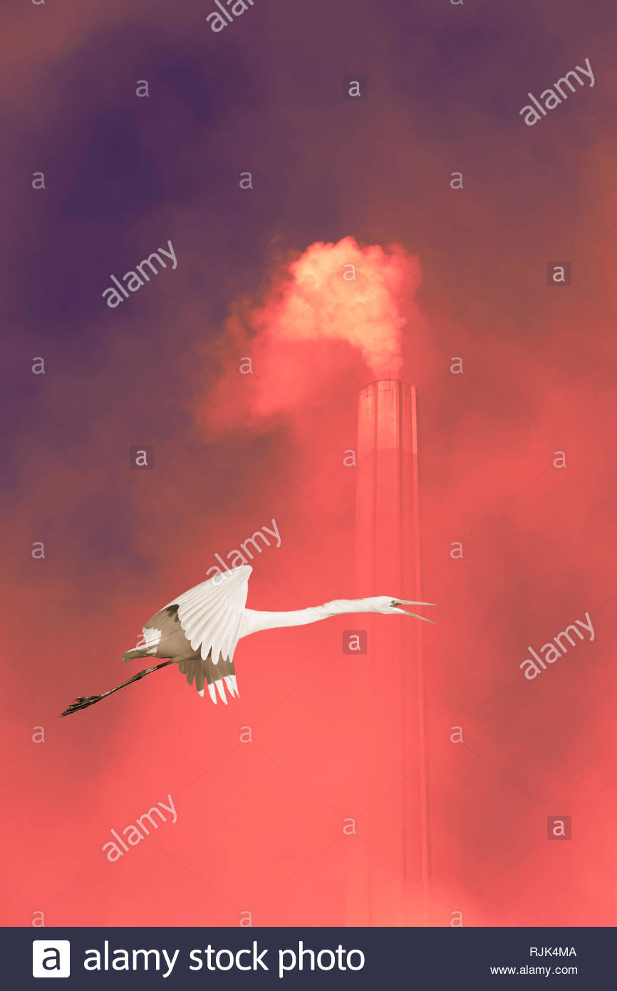 Global warming climate change anthropocene white egret bird flying past chimney smoke greenhouse gas. Stock Photo