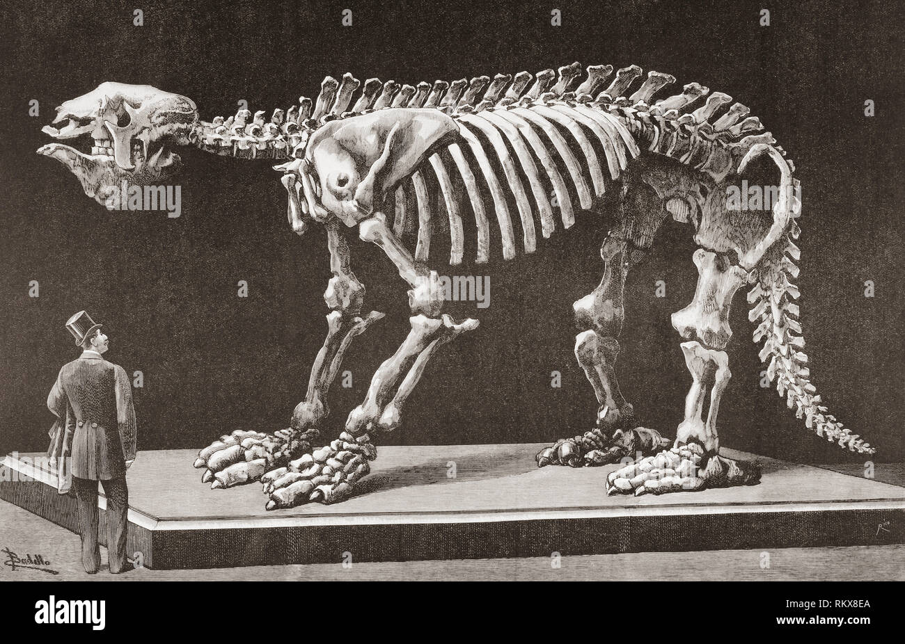 Megatherium americanum, Natural Sciences Museum, Madrid, seen here in the late 19th century.  The first Megatherium discovered in Argentina in 1788 was the first prehistoric animal skeleton mounted in 1795.  From La Ilustracion Espanola y Americana, published 1892. Stock Photo