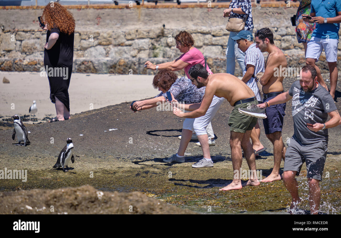 https://c7.alamy.com/comp/RMCEDR/group-of-visitors-surrounding-an-african-penguin-in-order-to-capture-their-perfect-picture-simonstown-south-africa-RMCEDR.jpg