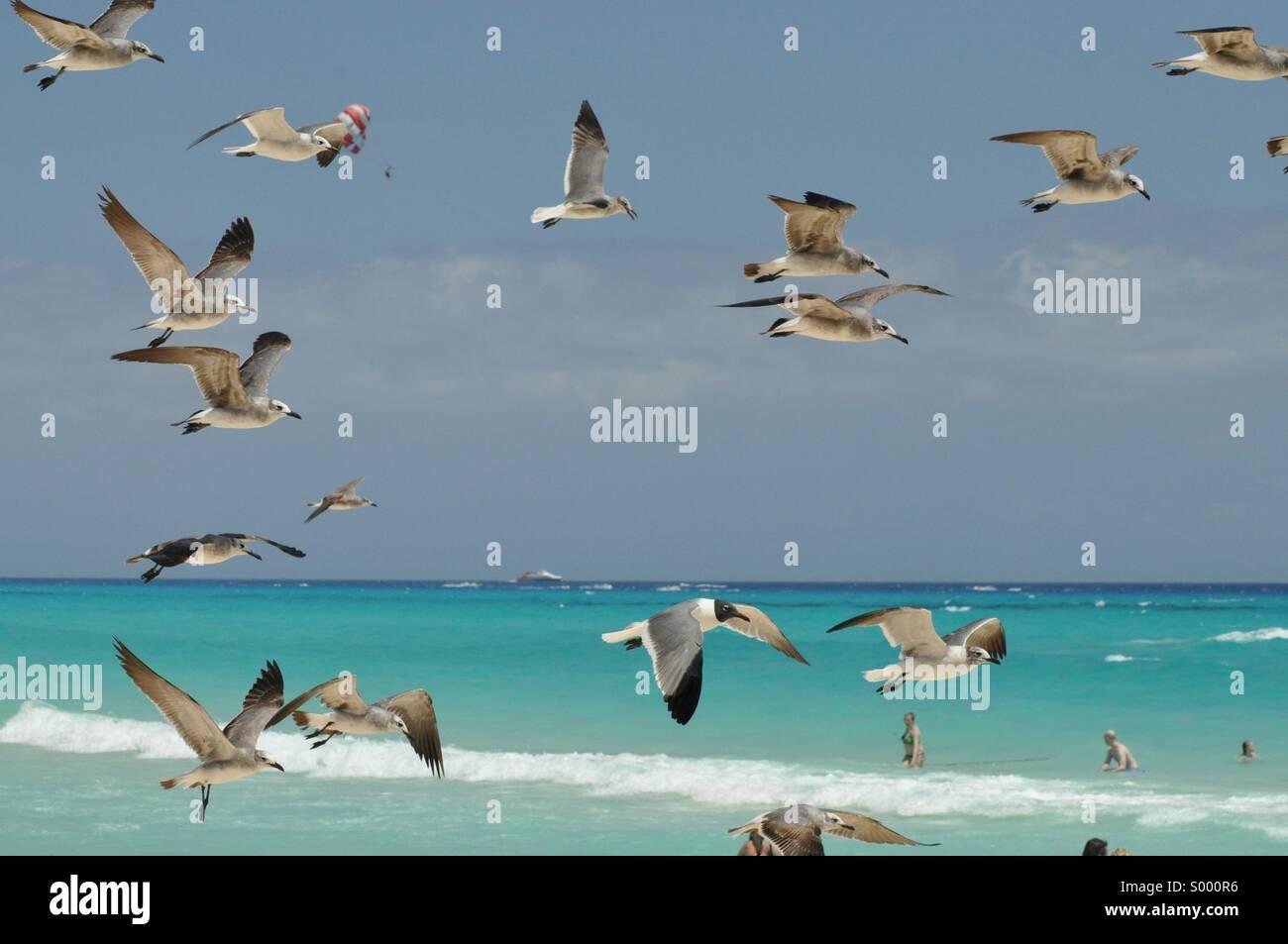 Playacar Mexico - Stock Image