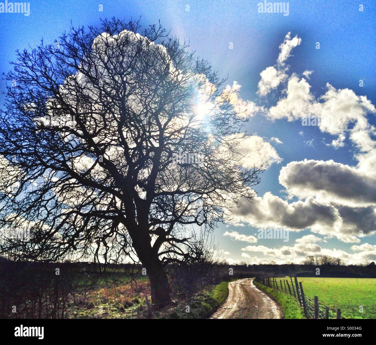 Rural lane, walnut tree and cloudy sky - Stock Image