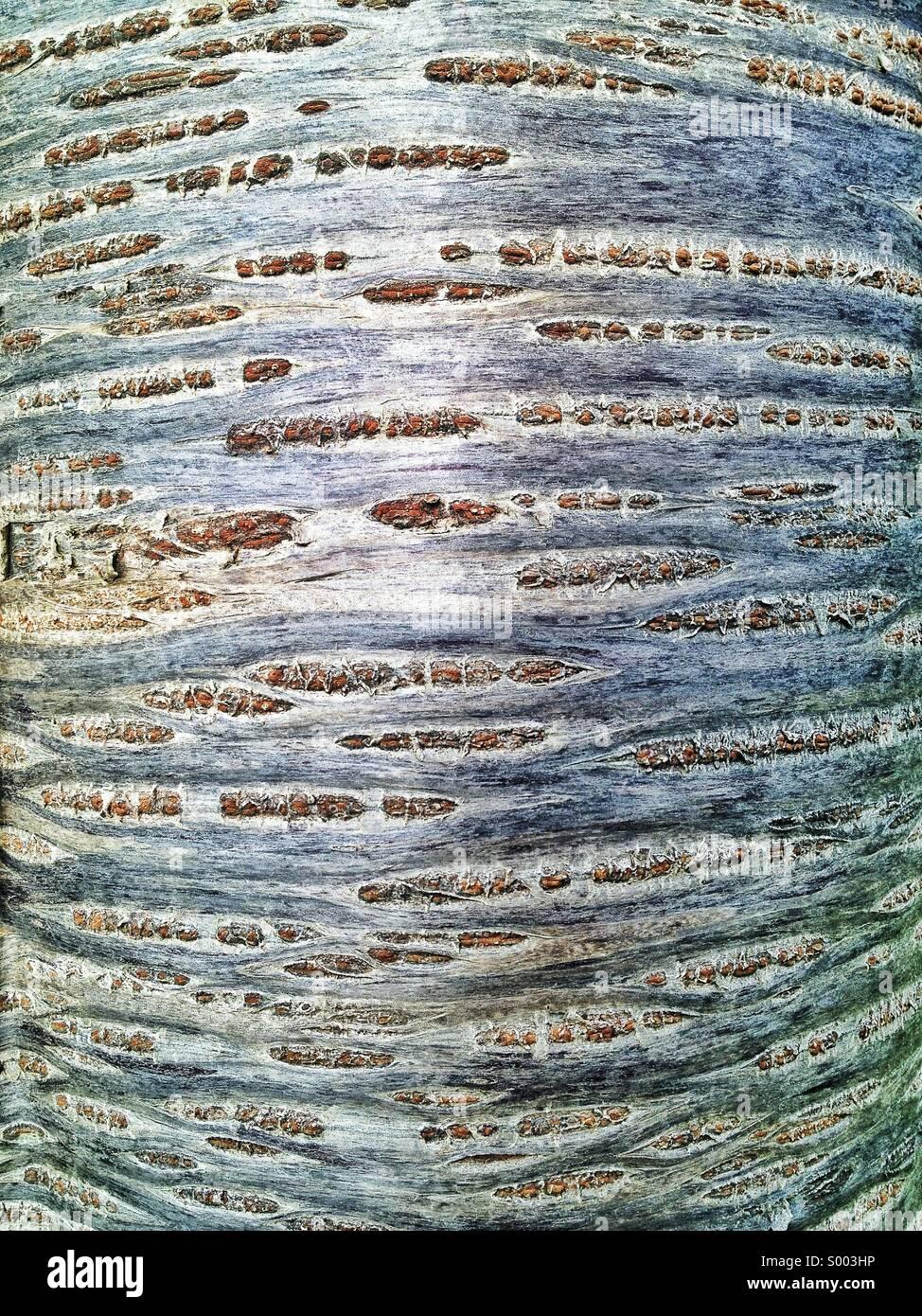 Abstract tree bark - Stock Image