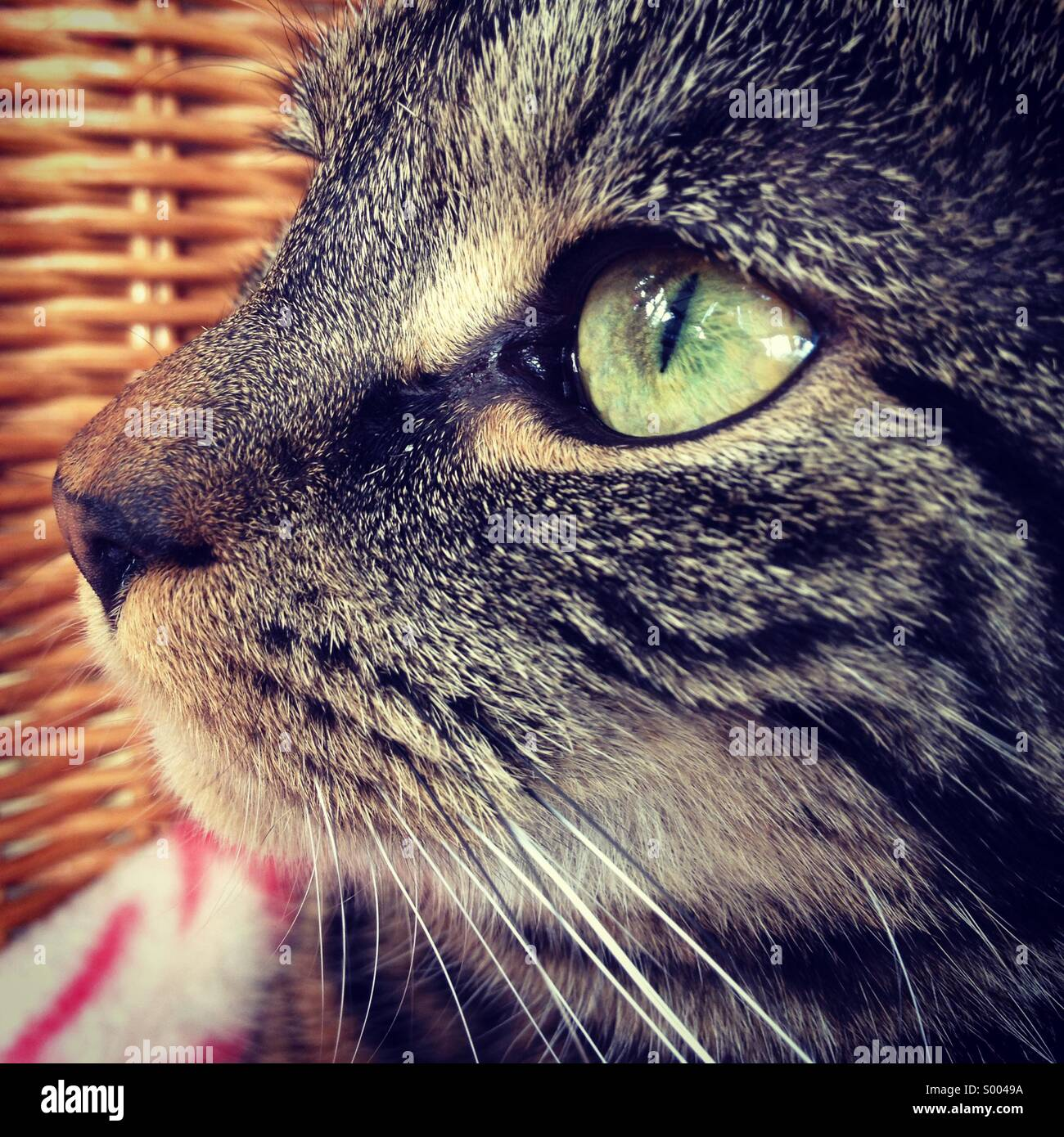 Close-up of a tabby cat profile - Stock Image