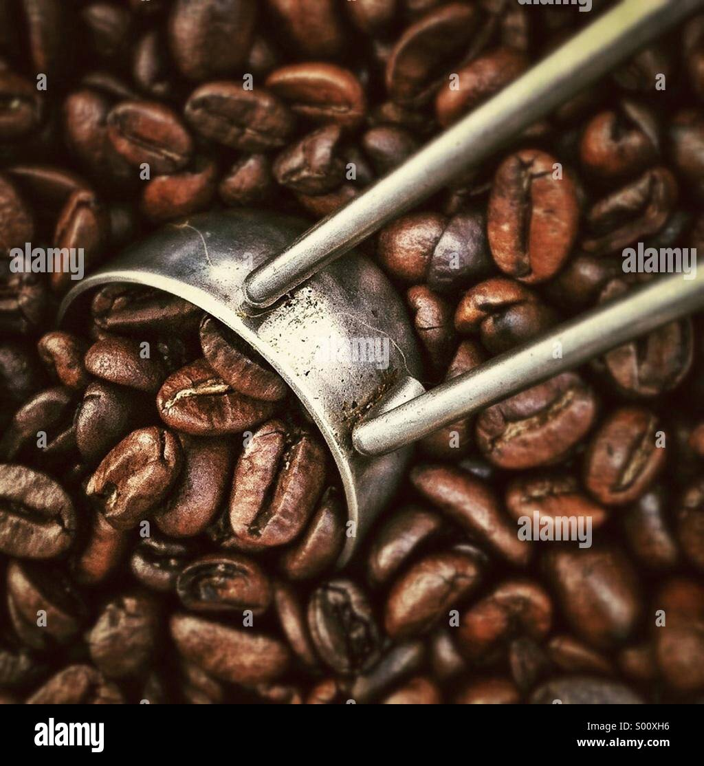 Coffee beans close up - Stock Image