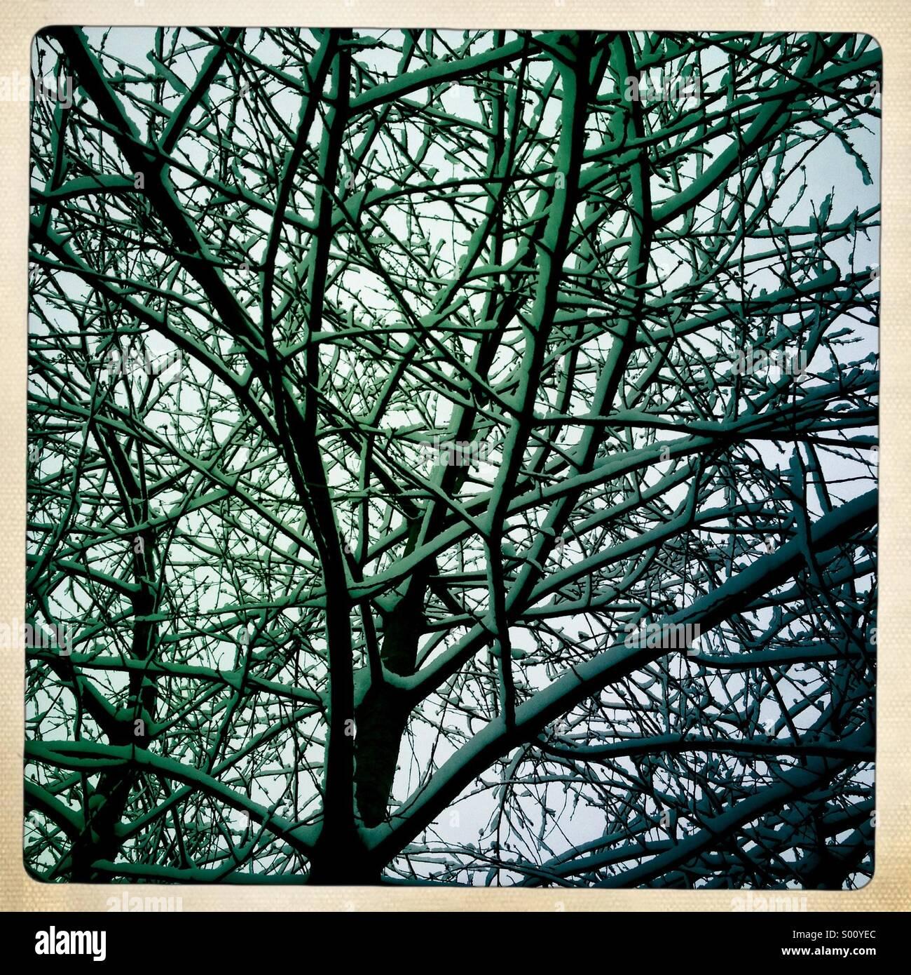 Snow in tree - Stock Image
