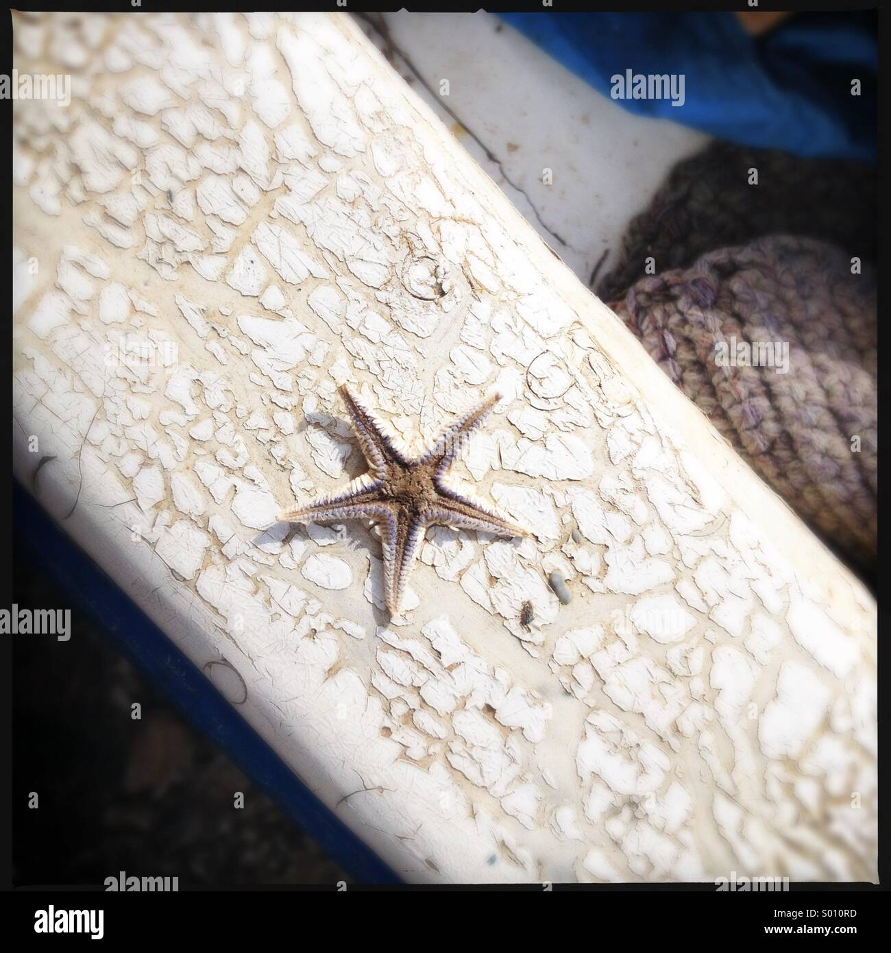 Tiny dried starfish on edge of cracked boat in Sampiere, Sicily. - Stock Image